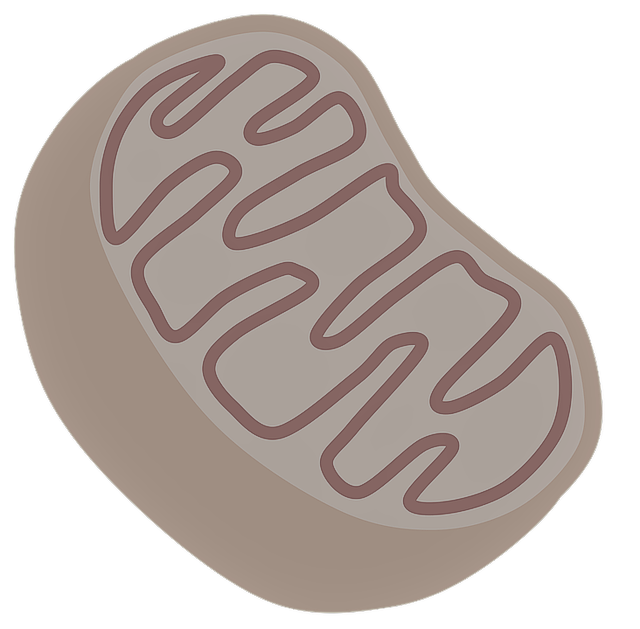 What does the mitochondria do? Function of the mitochondria, diagram of mitochondria