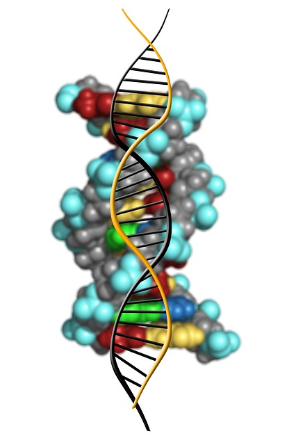 What is DNA? DNA Replication, DNA Structure, and Differences