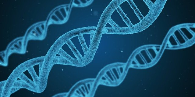 What is genetics? Introduction of genetics