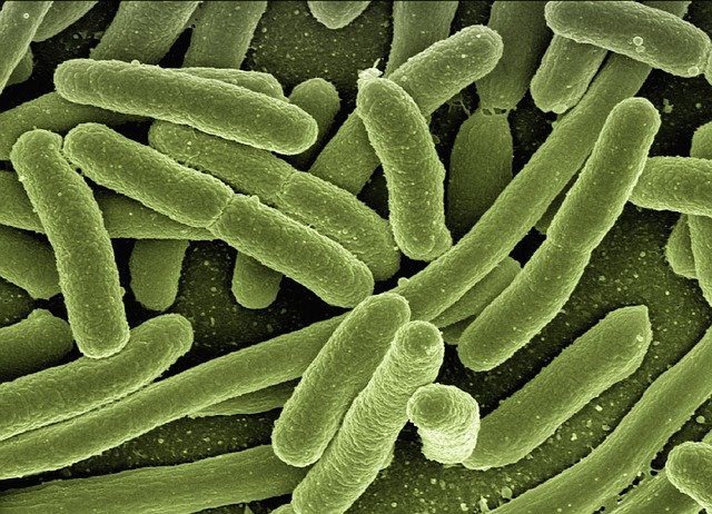 What are bacteria? Types, Structure, Examples, and viruses/bacteria