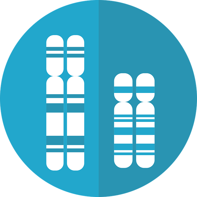 What are chromosomes, Structure, Function, Types