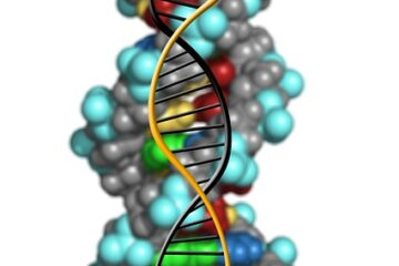 What are genes made of, What is a gene? History, Types of gene