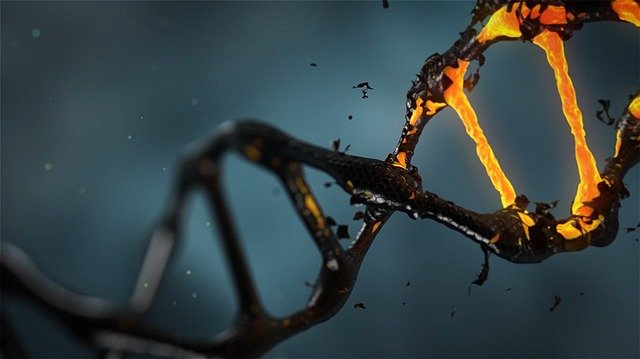 Free Images of DNA, DNA Images in Biology, DNA