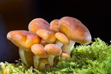 What are mushrooms? Characteristics, and Types