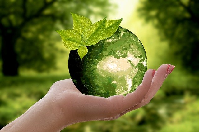 What is the environment? characteristics, Importance